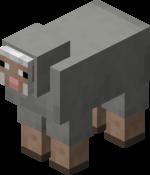 Owca jasnoszara.png