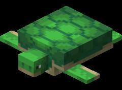 Żółw.png
