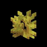 Koralowiec rogaty.png