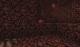 Czerwony grzyb netherowy.png
