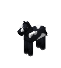 Black Baby Horse with White Field.png