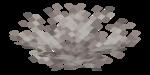 Martwy wachlarz koralowca mózgowatego.png