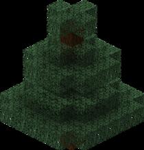 Świerkowe drzewo.png