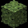 Brzozowe liście.png
