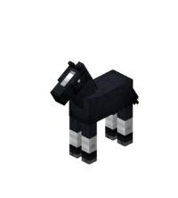 Black Baby Horse with White Stockings.png