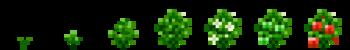 Красный сладкий перец (фазы роста) (TerraFirmaCraft).png