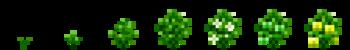 Желтый сладкий перец (фазы роста) (TerraFirmaCraft).png