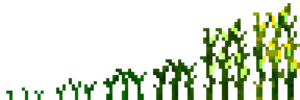 Кукуруза (фазы роста) (TerraFirmaCraft).png