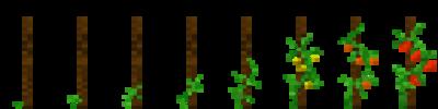 Томат (фазы роста) (TerraFirmaCraft).png
