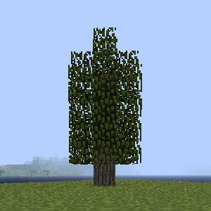 Дерево белого кедра.png