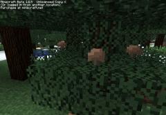 Грибы на дереве.png