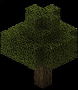 Дуб (TerraFirmaCraft).png