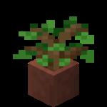Цветочный горшок (дубовый саженец).png