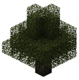 Гикори (TerraFirmaCraft).png