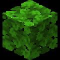 Дубовая листва.png