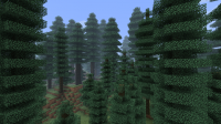 Coniferous Forest.png