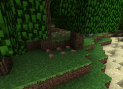 Mushrooms under tree.png
