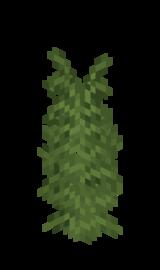 Равнинный раскидистый папоротник.png