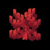 Огненный коралл.png