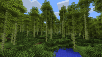 Bamboo Forest.png