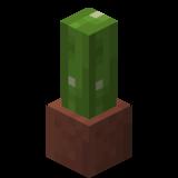 Посаженный кактус.png