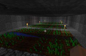 Plantacija.JPG