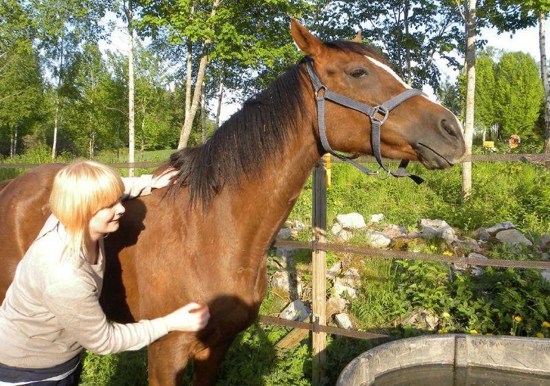 Файл:Намёк Джеба на лошадей.jpg