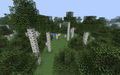 Birch Forest M.png