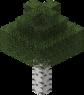 Birch Tree.png