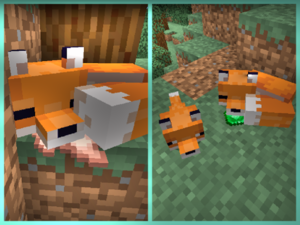 Foxes2.png