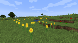 Sunflower Plains.png