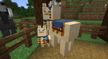兩隻已馴服的行商羊駝與幼年行商羊駝