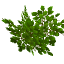 Fruitwoodleaves.png