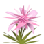 Pink Maguey.png