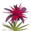 Red Maguey.png