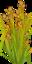 Rice Crop.png