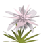 Grey Maguey.png