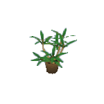 Plant-7.png