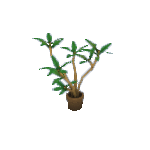 Plant-3.png