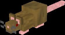 Brown rat.png