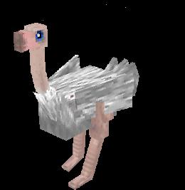 Albino ostrich.png