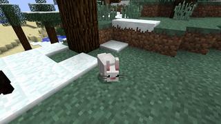 Bunny Official Mo Creatures Wiki
