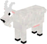 White goat.png