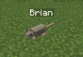 Brian.png