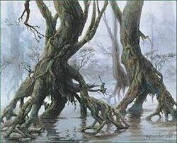 Skyshroud forest.jpg