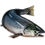 Icons Inventory Fishing Salmon.png