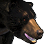 Icons Inventory Mount Bear 03.png