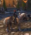 Palomino Horse.jpg