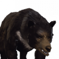 cave bear previous official neverwinter wiki. Black Bedroom Furniture Sets. Home Design Ideas