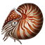 Icons Inventory Fishing Nautilus.png